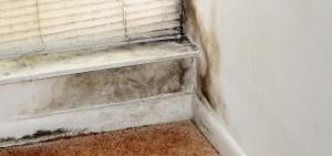 mold damage mold damage miami