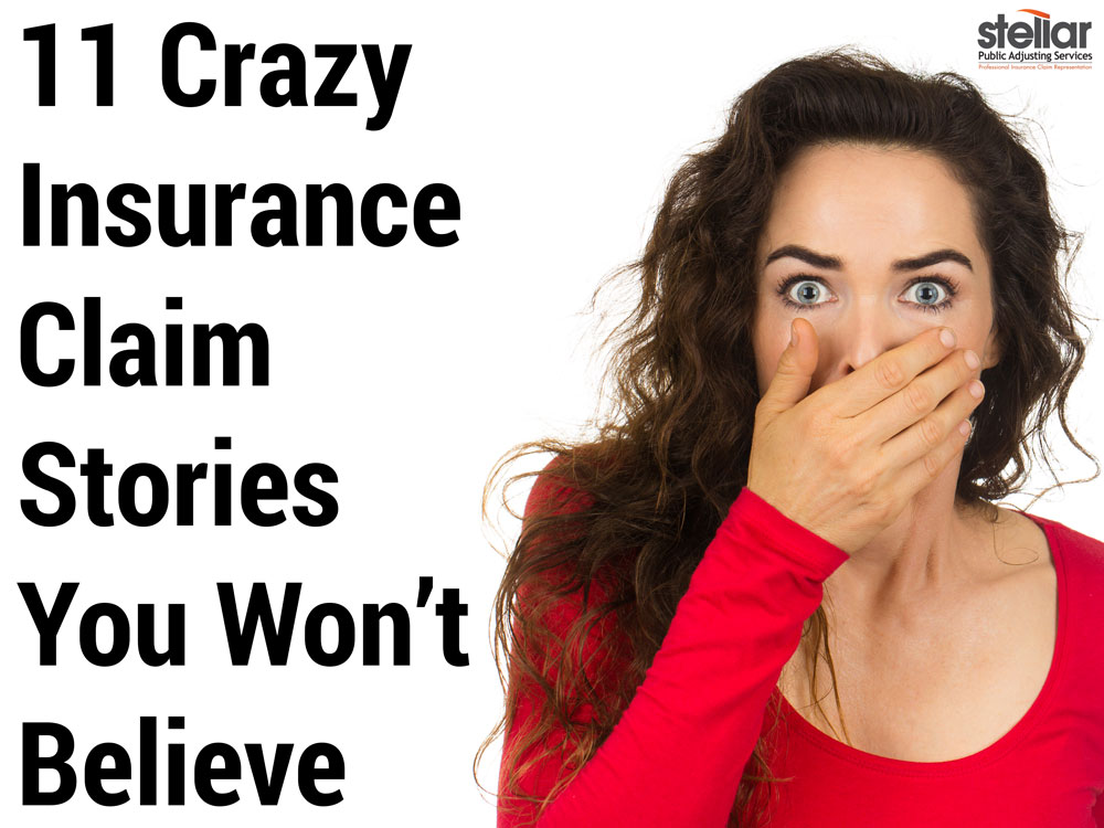 Funny Insurance Claims Stories Stellar Adjusting