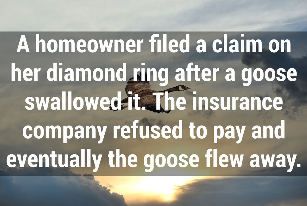 funny insurance claims stories