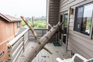 property-damage-fallen-tree-house-needs-repair