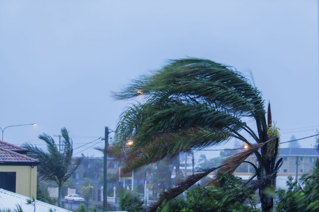 palm-trees-blown-over-by-hurricane-from-winds-during-rain-storm-miami-florida